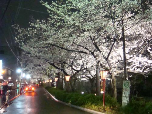 桜(その④)_f0201286_1093112.jpg