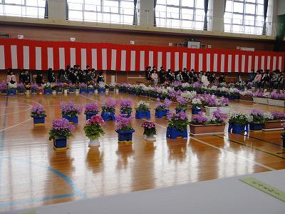 浦佐小学校入学式   大和中学校入学式_f0019487_645611.jpg