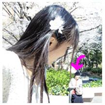 サクラの髪飾りを作りました。_d0224894_1752018.jpg