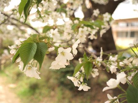 ちいさなお花見_d0174704_2234589.jpg