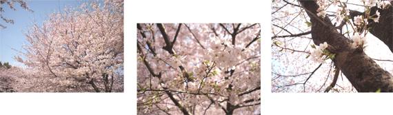 ちいさなお花見_d0174704_22513133.jpg