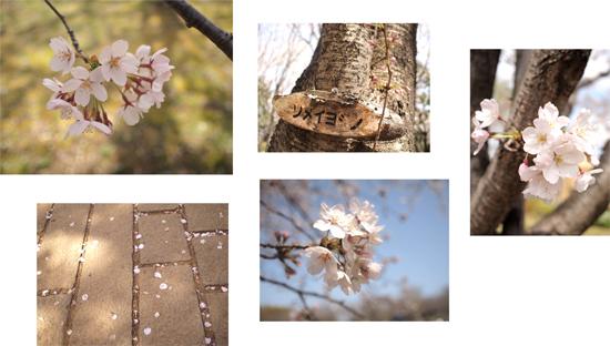 ちいさなお花見_d0174704_2314460.jpg