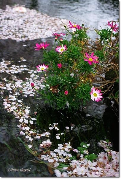 桜のトンネルとチューリップ_f0179404_20125694.jpg