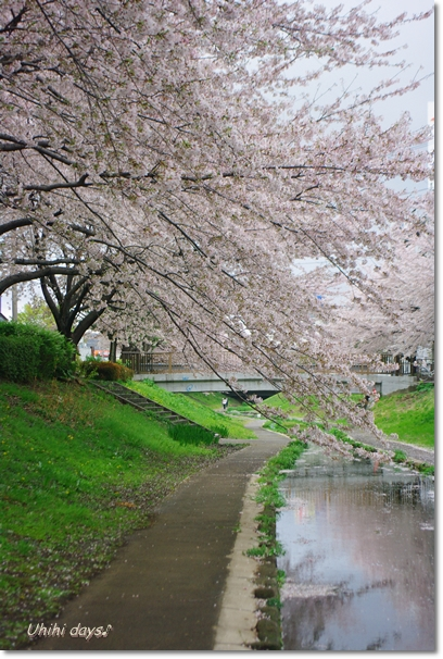 桜のトンネルとチューリップ_f0179404_20132065.jpg
