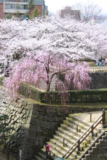 天気:晴れ、場所:福井城址_f0229508_1331241.jpg