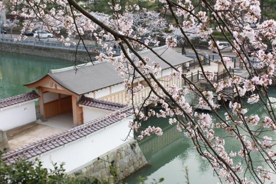 桜通信 from福井_f0229508_1835537.jpg