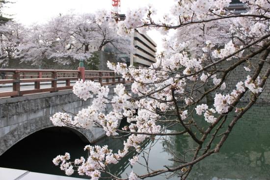 桜通信 from福井_f0229508_183675.jpg