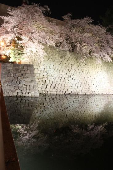 桜通信#02「夜桜」 from福井_f0229508_19301033.jpg
