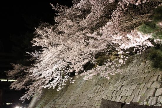 桜通信#02「夜桜」 from福井_f0229508_19302226.jpg