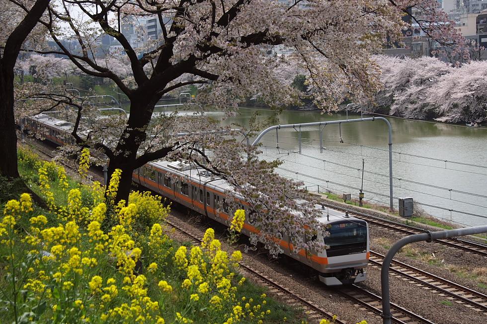桜花爛漫_b0190710_2228482.jpg