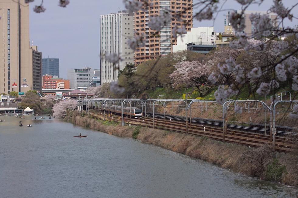 桜花爛漫_b0190710_22304263.jpg
