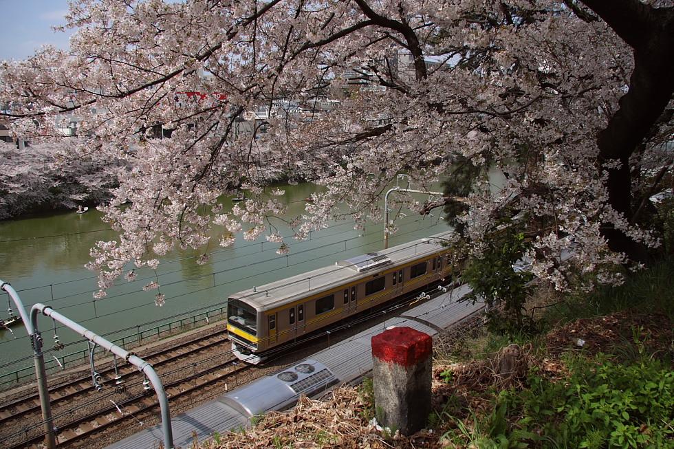 桜花爛漫_b0190710_2230568.jpg