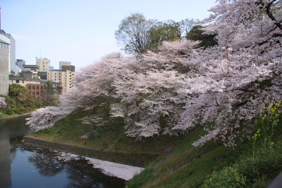 桜花爛漫_b0190710_22315782.jpg