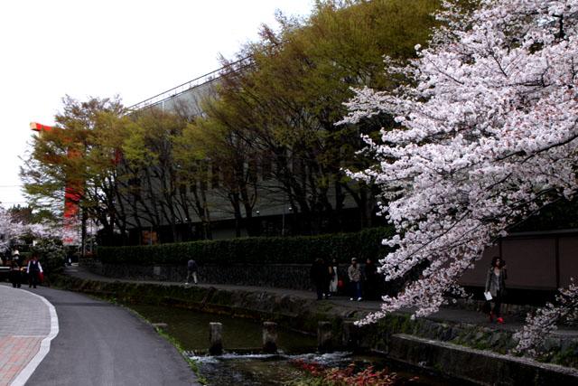 京の花だより 白川散策_e0048413_20171666.jpg