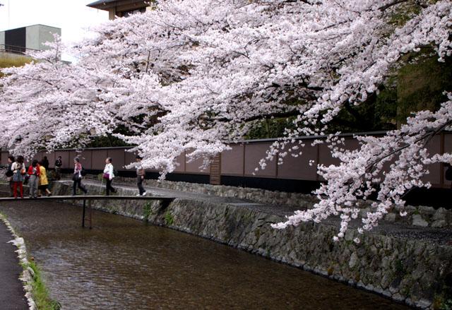 京の花だより 白川散策_e0048413_20173269.jpg