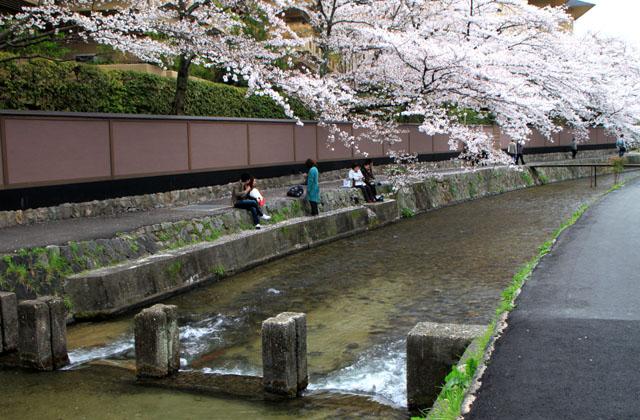 京の花だより 白川散策_e0048413_2017497.jpg