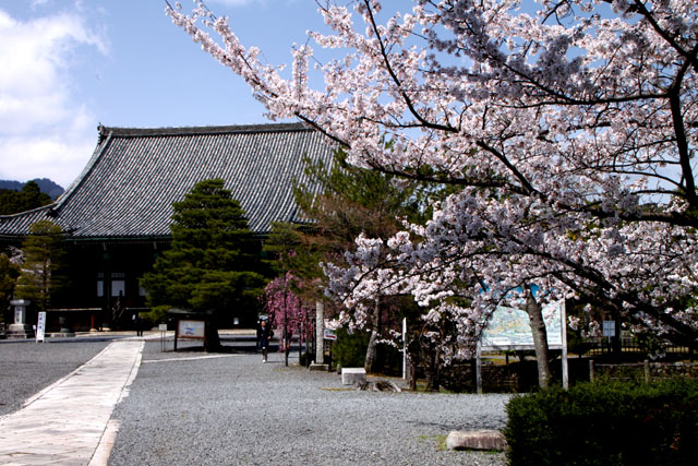 京の花だより 清涼寺 狂言_e0048413_2141836.jpg