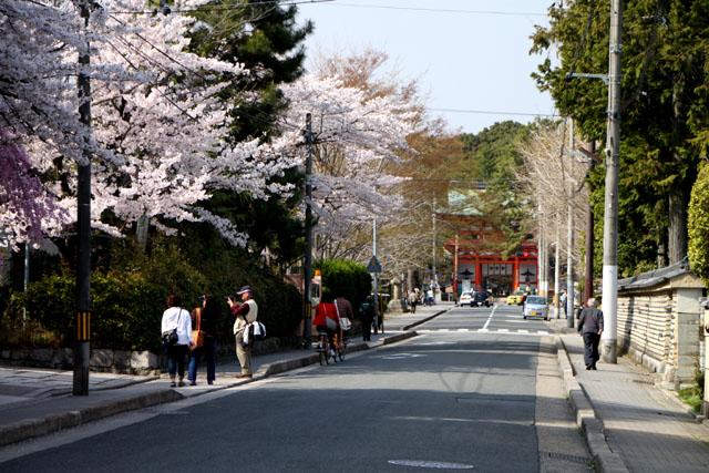 京の花だより 今宮神社やすらい祭_e0048413_21425052.jpg