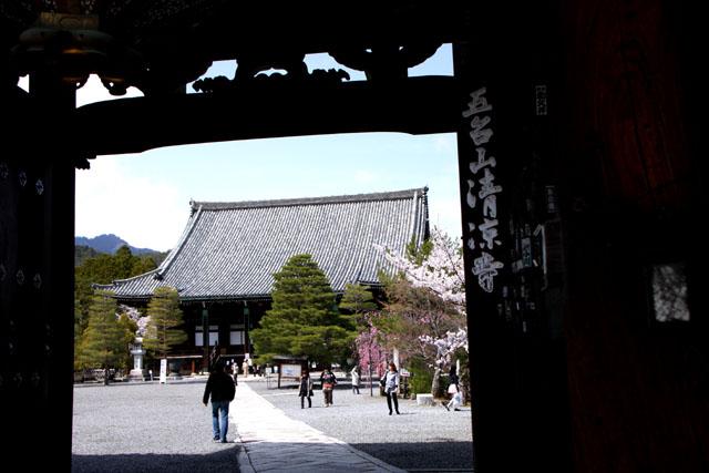 京の花だより 清涼寺 狂言_e0048413_214651.jpg