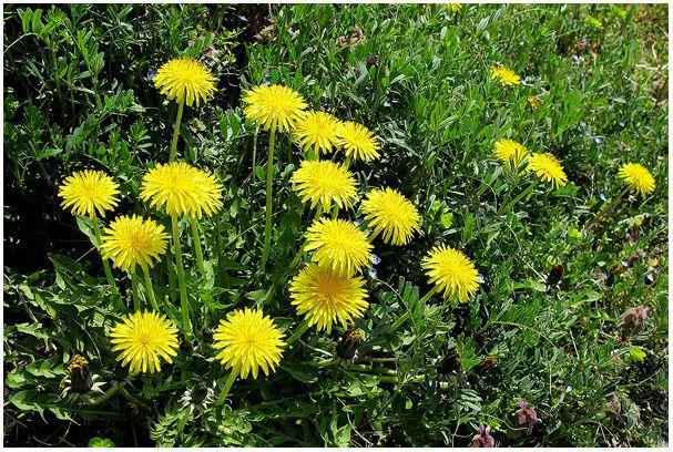 春の花たち_c0042324_23483073.jpg