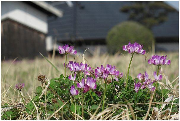 春の花たち_c0042324_2349047.jpg