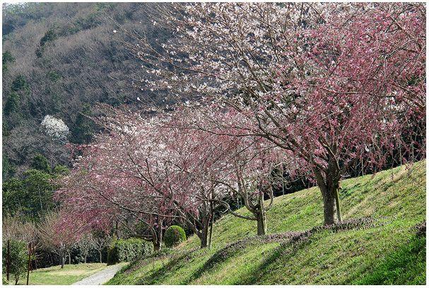春の花たち_c0042324_23491156.jpg