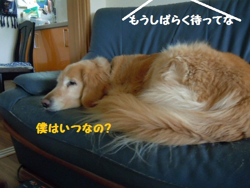 f0114128_1847416.jpg