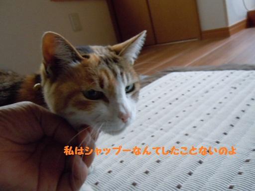 f0114128_18483464.jpg