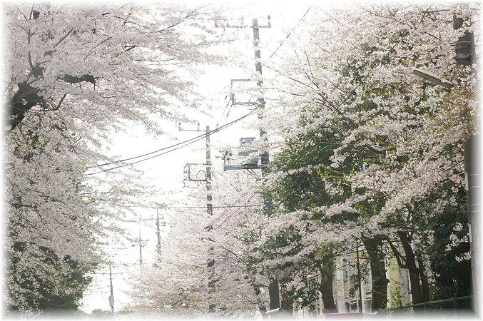 桜散歩。_c0080132_17522316.jpg