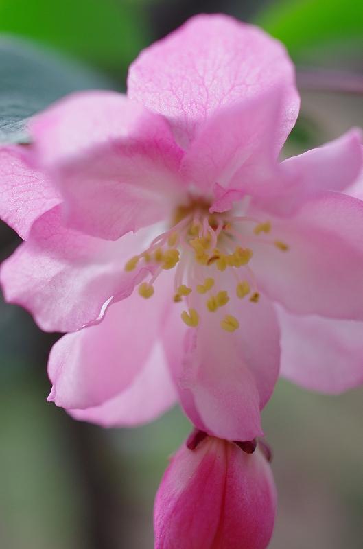 いつの間にかに春爛漫_f0050534_16161399.jpg