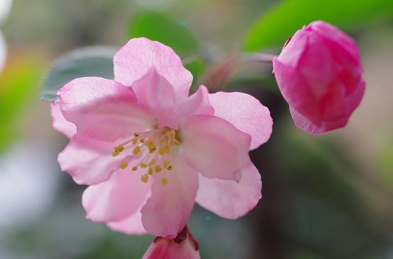 いつの間にかに春爛漫_f0050534_16162260.jpg