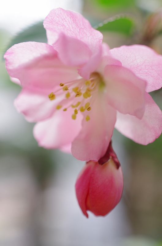 いつの間にかに春爛漫_f0050534_1616319.jpg