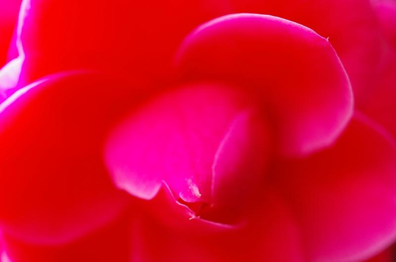 いつの間にかに春爛漫_f0050534_161635100.jpg