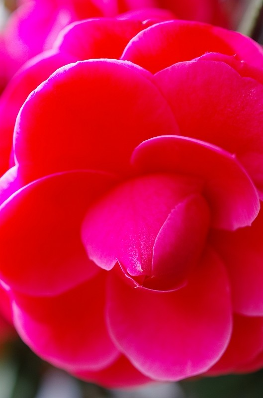 いつの間にかに春爛漫_f0050534_16164125.jpg