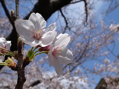 今年も咲きました_e0063335_1992681.jpg