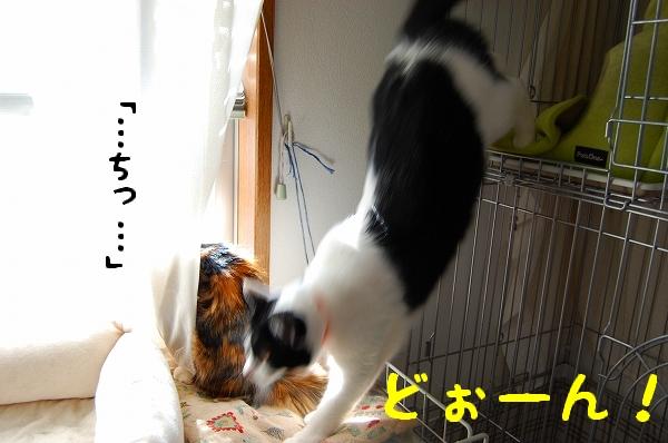 c0181639_0521045.jpg