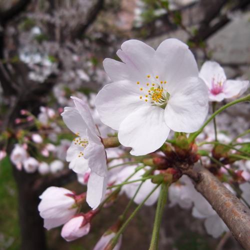 そして今年も花は咲く_a0006744_23165444.jpg