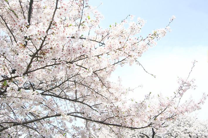 Spring!!_a0136846_22401891.jpg