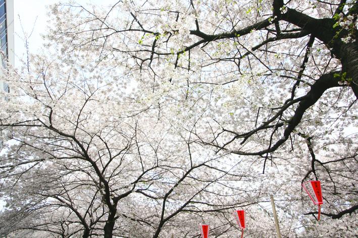 Spring!!_a0136846_22405530.jpg
