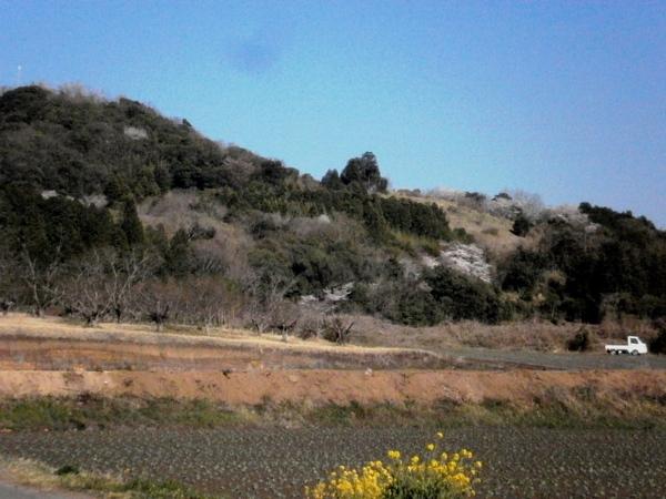 白鹿山と桜_a0174458_18425240.jpg