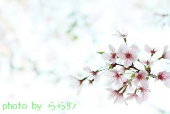 b0185771_22244863.jpg