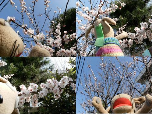 手乗り犬、花を見る_c0158573_9445966.jpg