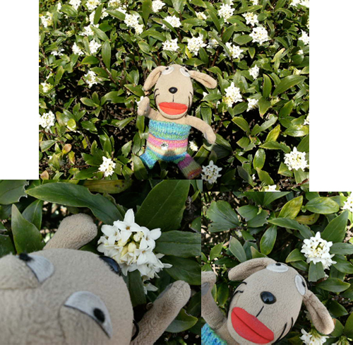 手乗り犬、花を見る_c0158573_9475242.jpg