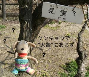 手乗り犬、花を見る_c0158573_952324.jpg