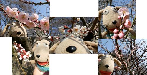 手乗り犬、花を見る_c0158573_9534950.jpg