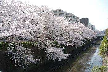 桜&サクラ_d0126473_2236459.jpg