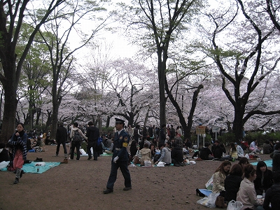 芋焼酎 「鴨神楽 古酒」 吉祥寺の酒屋より_f0205182_21234345.jpg