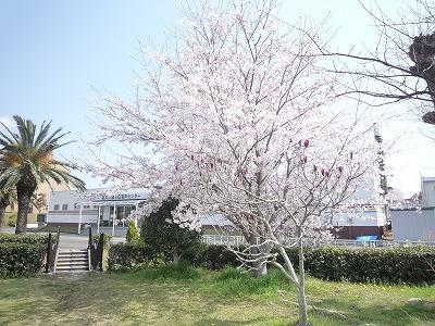 咲きました☆☆_c0184994_1455117.jpg