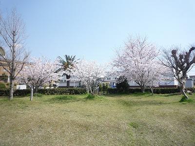咲きました☆☆_c0184994_1471933.jpg