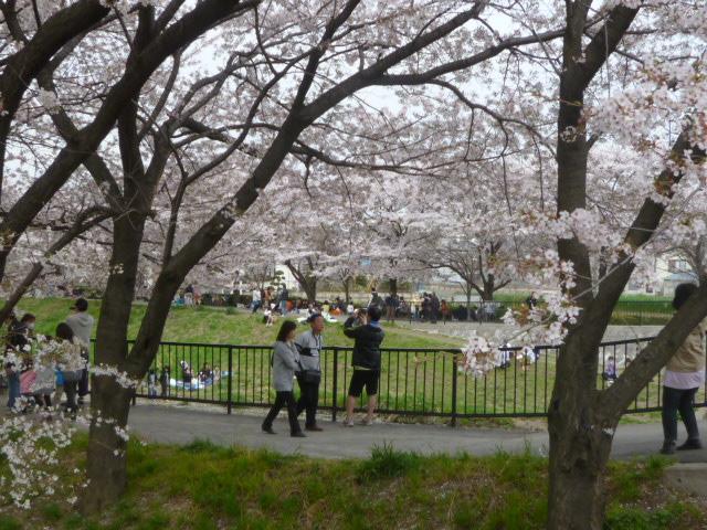 ・・・桜、選挙_b0024696_21553377.jpg